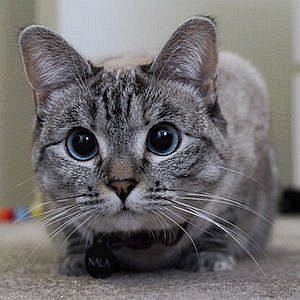 Age Of Nala Cat biography